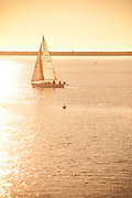 Sailing At Sunset In Venice Beach California