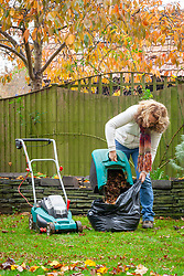 Making leaf mould. Picking up leaves using a lawn mower then putting them into a bin liner