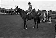 "08/08/1962<br /> 08/08/1962<br /> 08 August 1962<br /> Dublin Horse Show at the RDS, Ballsbridge, Wednesday. <br /> Picture shows ""Badna Bay"", a brown 4 year old gelding, owned by the Duchess of Westminster, Bryanstown, Maynooth, Co. Kildare and shown by Capt. E. Glen Browne, Master of the Hunt, Cork. ""Badna Bay"" won Supreme Hunter Champion of the Dublin Horse Show."