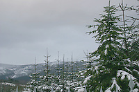 Snow covered trees in Wicklow, Ireland