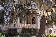 Live Oak tree and spanish moss on a home along Forsyth Park Savannah, GA.