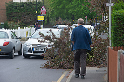 © Licensed to London News Pictures 20/05/2021. Orpington, UK. Strong winds have blown part of a tree down in Orpington, South East London, blocking a pathway and part of a road. The unsettled May weather continues with heavy rain and gale force winds today. Photo credit:Grant Falvey/LNP