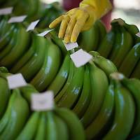 preparing organic Fairtrade bananas for export at a processing plant in Salitral, Piura, Peru
