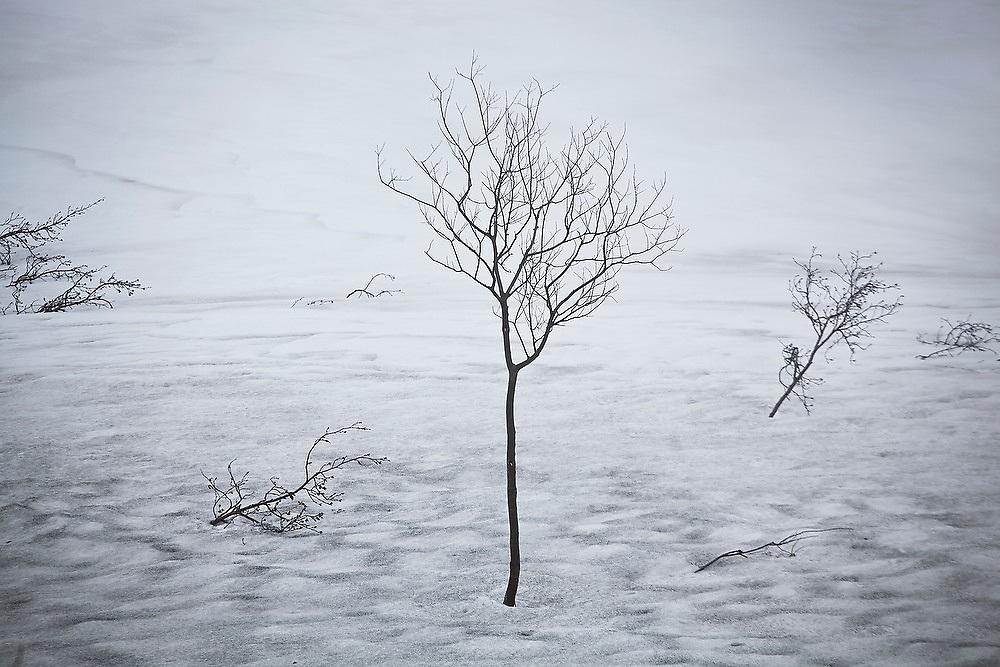 Trees and shrubs gradually emerge from the melting snow on Thompson Pass, in the Chugach Mountains near Valdez, Alaska.