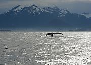 Humpback Whale, Sitka, Alaska<br />