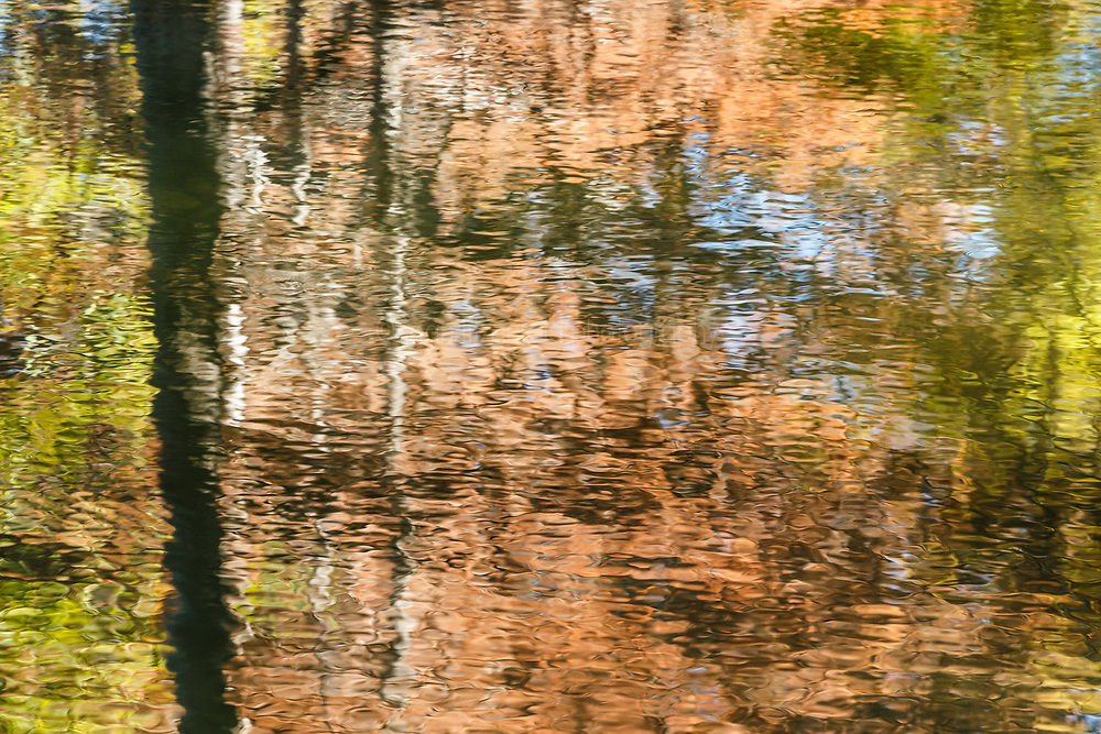 Cypress tree reflections in water on Cypress Creek near Comfort, Texas USA