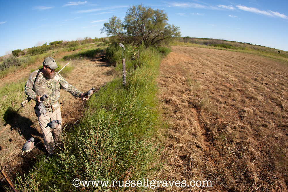 DOVE HUNTER WITH DECOYS