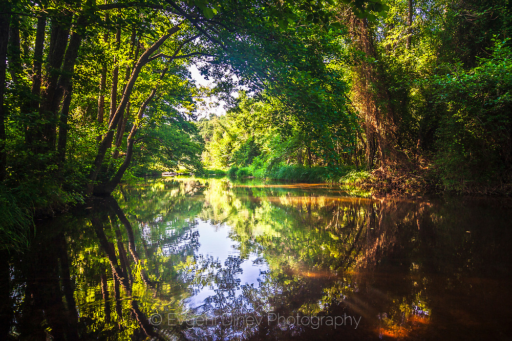 Reflections of a forest in the river