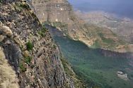 Eine Dschelada-Gruppe (Theropithecus gelada) am Morgen in den Felswänden, wo sie die Nacht verbracht haben, Simien Nationalpark, Debark, Region Amhara, Äthiopien / <br /> <br /> A Gelada group (Theropithecus gelada) in the morning in the rock walls where they spent the night, Simien National Park, Debark, Amhara Region, Ethiopia
