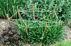 Staking perennial plants with cat's cradle of string and sticks. Design: Helen Yemm