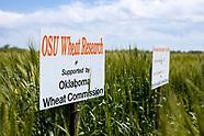 2020 Chickasha Wheat Variety Plots