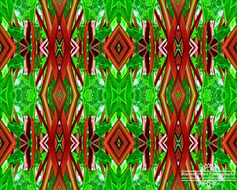 Rhubarb photo montage