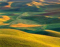 Wheatfields in evening light, The Palouse Washington USA