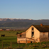 USA, Idaho, Tetonia. Farm building and cows in rural Idaho.