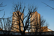 Silhoutette of trees in front of two council housing tower blocks in Southwark, London, UK.