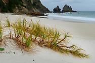 Oceania, New Zealand, Aotearoa, North Island, Coromandel, Beach