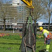 Amsterdam, 06-05-2013. De eerste kunstwerken ARTZUID, de Internationale Sculpture Route van 22 mei t/m 22 september, zijn geplaatst op de Apollolaan te Amsterdam, ter hoogte van het Hilton Hotel. Op de foto: Lo Spazio della Sculptura van kunstenaar Guiseppe Penone.