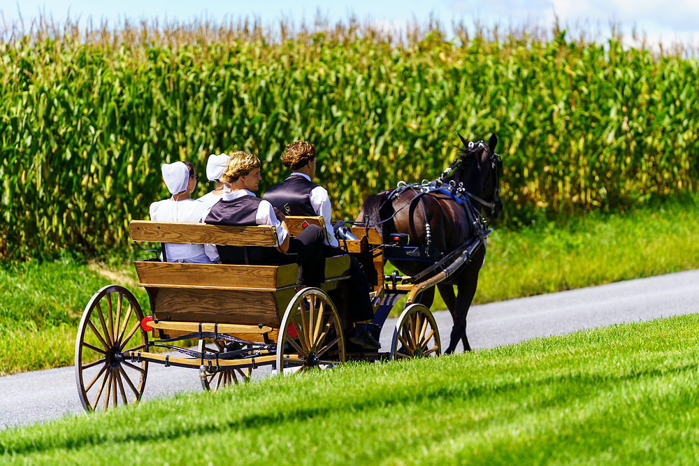 Ronks, PA, USA - August 30, 2020: An Amish horse-drawn wagon travels on a rural road in Lancaster County.