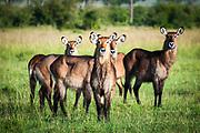 Kenya, Masai Mara, 2014