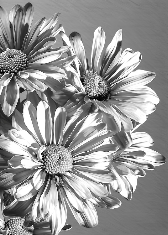 Flowers along the side of the road in black and white macro detail