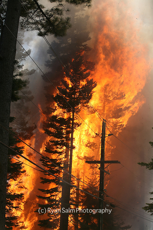 Tall trees and telephone poles go in in flames during fire in Lake Tahoe.