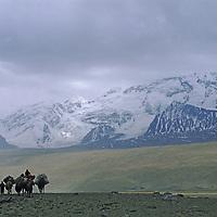CHINA, XINJIANG. Khyrgiz nomads lead their Bactrian Camels below  7,546-meter Mustagh Ata in the Pamir Mountains of Xinjiang, China.