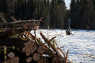 Photo Randy Vanderveen.south of Grande Prairie.Mort ??? of the South Peace Municipalities Pine Beetle program returns to his truck via snow machine after a day of checking things out in one of the plots south of Grande Prairie.