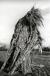 unusual figure made of dry cornstalks in a field