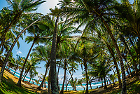 Palm trees, Akurala Beach, south coast of Sri Lanka.