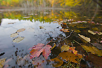 Fall leaves in Heywood Meadow at Walden Pond.