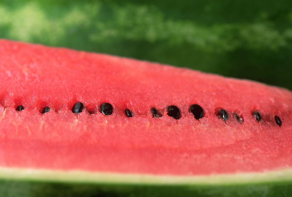 Extreme close up selective focus photograph of the inside of a Jubilee watermelon with it's row of seeds