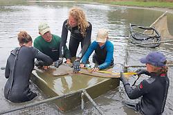 Earthwatch Team Measuring Shovelnose Guitarfish