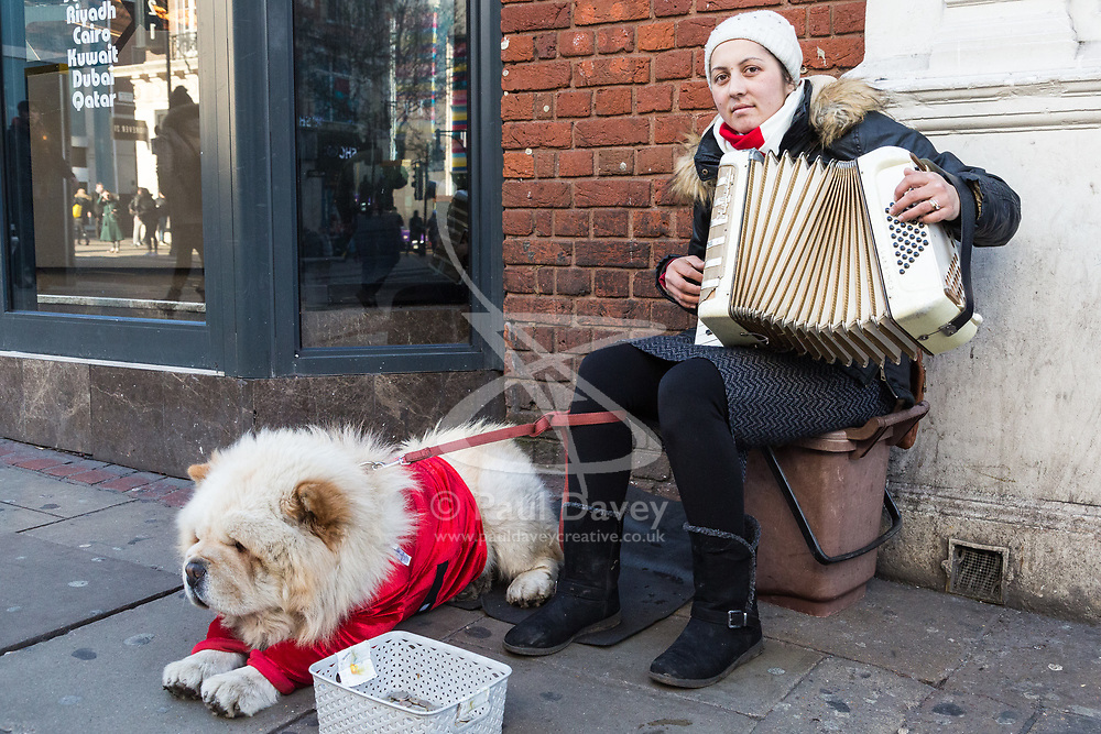 A woman with her XXX dog plays the accordion on Oxford Street in London as Eastern European beggars and street performers take advantage of the UK's relative wealth, squeezing opportunities for the UK's own homeless. London, December 13 2018.