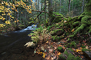 Fall leaves at Sasquatch Provincial Park's Trout Creek near Harrison Hot Springs, British Columbia, Canada