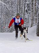 Alaska. Skijorring Races, Kathy Faryniarz and her dog; Anchorage Skijor Club. (MR)