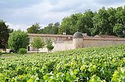 Vineyard. Chateau Jonqueyres, Bordeaux Superieur, Entre deux Mers, Bordeaux, France