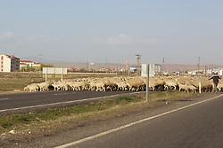 Sheeps Crossing Road