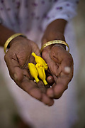 A woman holds blossoms that she will use as offerings Tamaraikulum Elders village, Tamil Nadu, India