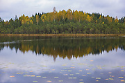 Golden birch leaves and green pine needles across small lake in bog woodland mixed with small patches of bogs, Vidzeme, Latvia Ⓒ Davis Ulands   davisulands.com