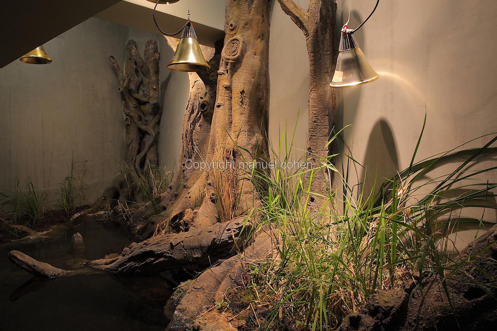 Parc Zoologique de Paris, <br /> Vivarium<br /> Gardon, Rutilus rutilus, Common roach<br /> Cistude d'Europe, Emys orbicularis orbicularis, European pond turtle<br /> Goujon, Gubio, gubio, Gudgeon new Parc Zoologique de Paris, or Zoo de Vincennes, (Zoological Gardens of Paris, also known as Vincennes Zoo), Museum National d'Histoire Naturelle (National Museum of Natural History), 12th arrondissement, Paris, France. Picture by Manuel Cohen
