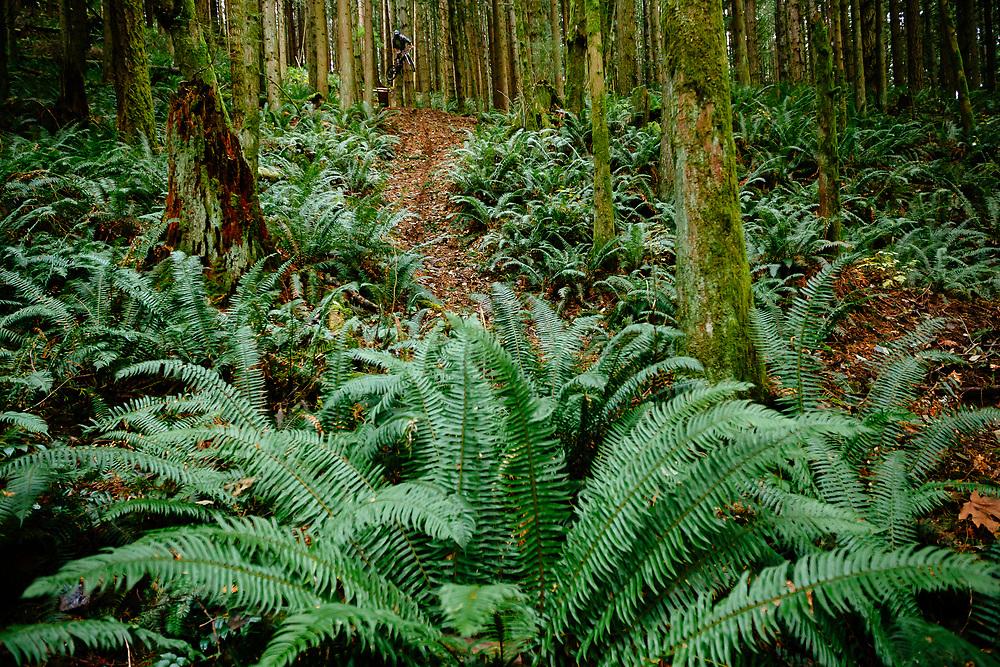 Owen Dudley drops monster air in the forest near Bellingham Washington.