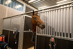 Fletcha van't Verahof<br /> Departure of the horses to the Rio Olympics from Liege Airport - Liege 2016<br /> © Hippo Foto - Dirk Caremans<br /> 30/07/16