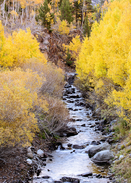 McGee Creek, Aspen and Willow in Fall, Inyo National Forest, Mono County, Caifornia