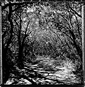 Seal Rocks, North Coast NSW. Black and White Photos of Bush Tracks featuring Trees and Shadows by Paul Green. Photos taken with Square format Hasselblad 503cx camera.