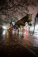January 9, 2013, New Orleans LA, Donkey drawn carriages await tourist on a foggy night in the French Quarter.