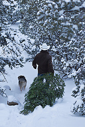 All American Cowboy carrying a Christmas Tree in the snow