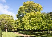 Gardens at Corsham Court, Corsham, Wiltshire, England, UK