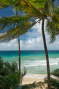 Idyllic landscape with view of a beach and palm trees, Little Corn Island, Nicaragua