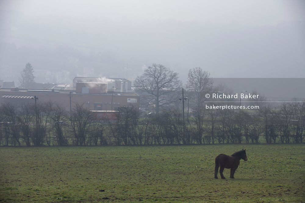 On a misty morning, a single pony grazes in a field in front of the Delacre biscuit production factory in Lambermont, Belgium.