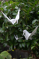 Origami Crane Parents and Baby - Origami is the Japanese word for paper folding.  Ori means fold and gami means paper.  It is the art of paper folding that has been handed down from parent to child through the generations.  Origami normally involves the creation of paper forms by folding likenesses of animals, birds, fish, and geometric shapes. The most common are that of cranes. Even young children learn to make them.  The custom originated in Japan when gifts were decorated with nosh which had intricate folded patterns to adorn gifts.  Japanese elementary schools often have origami as part of arts and crafts classes but it is most commonly taught at home.   Traditional origami has been in practice in Japan since the Edo Period.  E sometimes cutting the paper or using nonsquare shapes to start with. The principles of origami are used in many Japanese designs, including industrial ones.